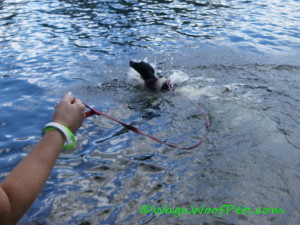 There was a lot of splashing as Luke learned to swim!