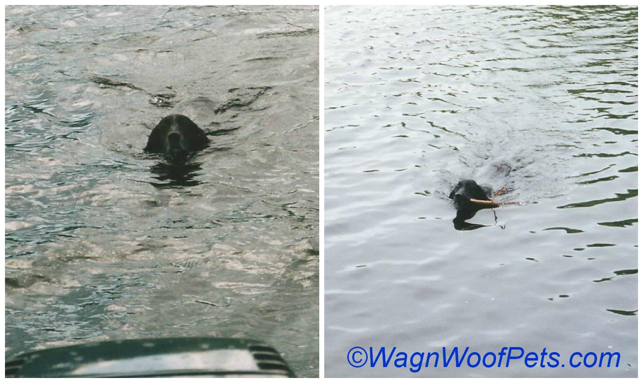 Maggie swim