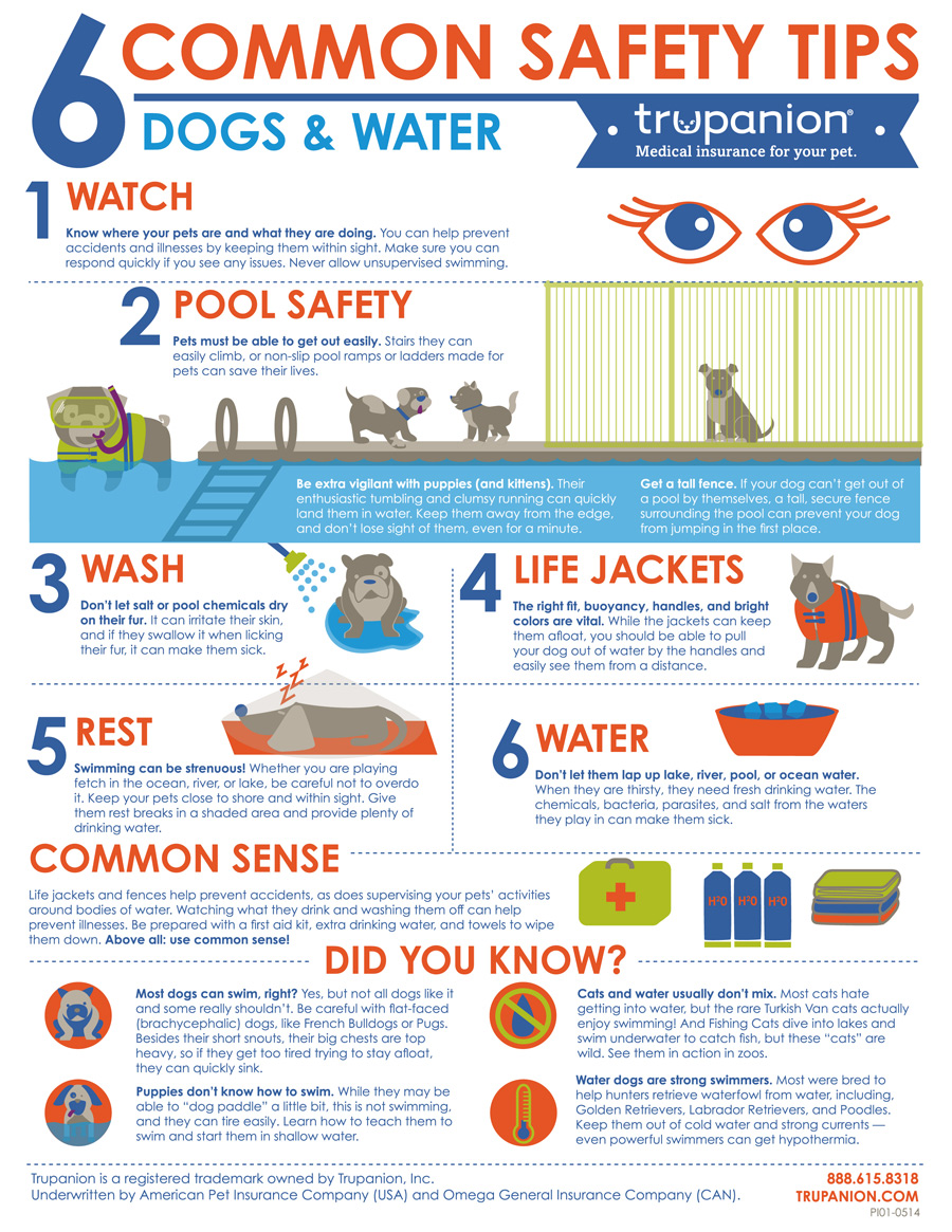 Trupanion-Water-Safety-Infographic-8