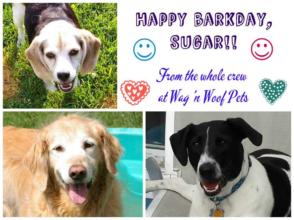 Sugar birthday card