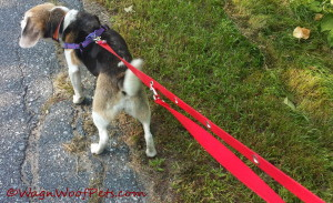 Making the leash shorter is a snap (pun intended)!