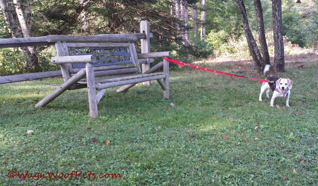 Easy tethering to any stationary object, and you can give them a little or a lot of length to move.