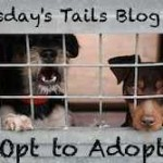 Tuesday's Tails – Adopt-A-Shelter-Dog (or Two) Month
