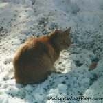 Barking About…..Senior Cats & Feline Arthritis