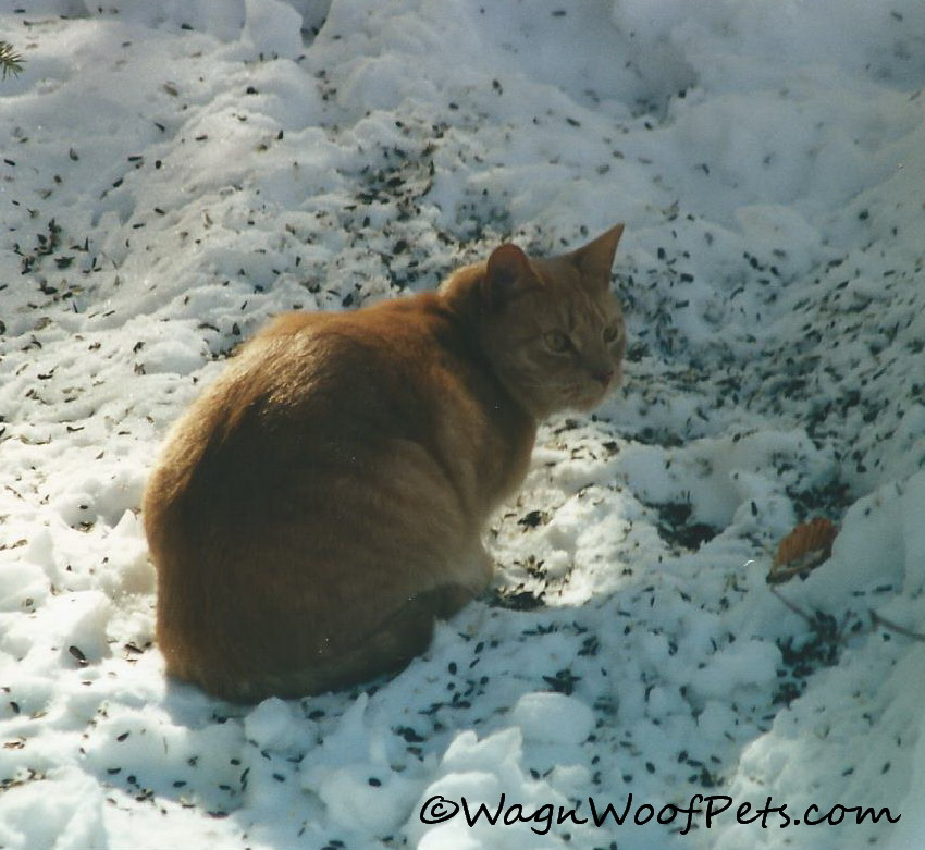 Conrad was an active outdoor cat in his younger years.