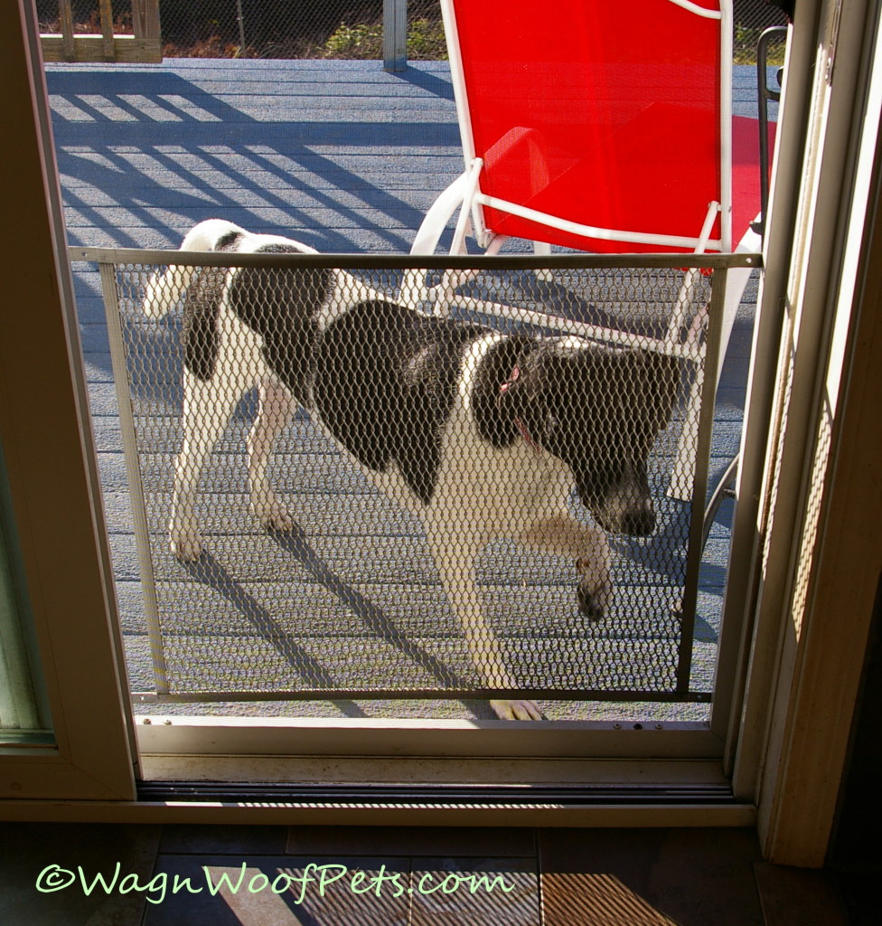 Let me in!!  Hurry!  You can see why we need a screen guard on the door.