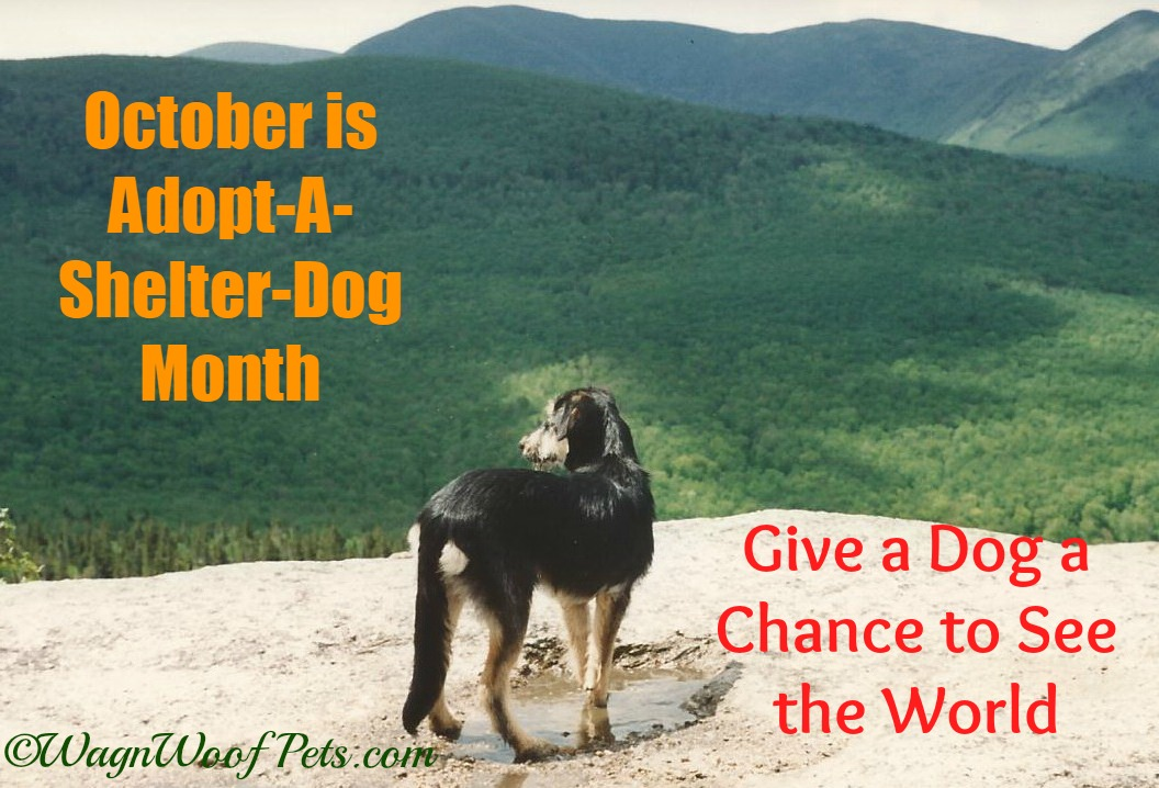Shelby Shelter Dog 2