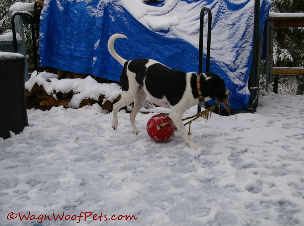 Enjoying the jolly ball.