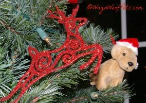 Reindeer and dog
