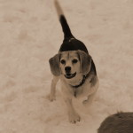 Snow Beagle – Start Her Up!