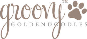 groovygoldendoodles1