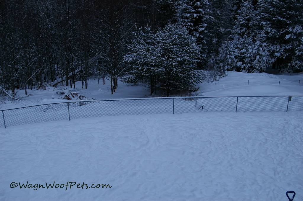 Luckily the snow is fluffy, or we'd have to worry about escapees jumping the fence.