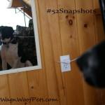 "#52Snapshots ""Mirror"""