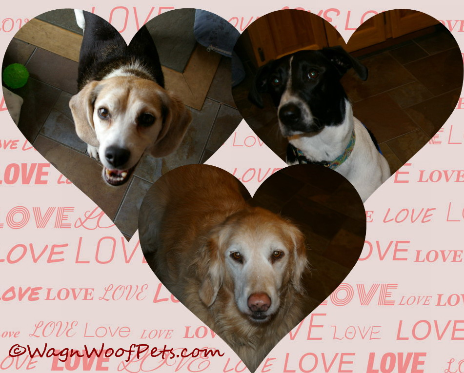 These expectant faces deserve some special Valentine's treats!  We bet your dog does too!