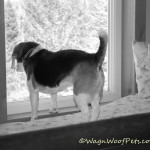 Black & White Sunday – Surveying