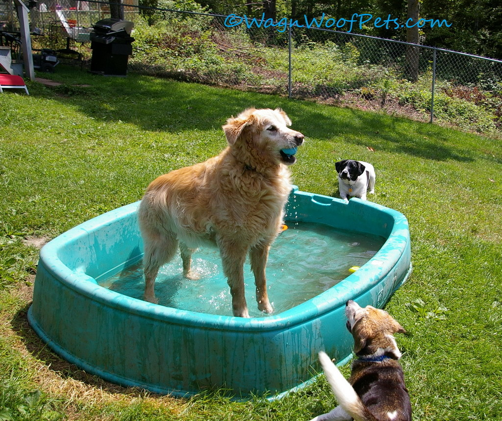 This pool is fun for cooling off, but you can't swim in it!