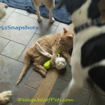 "Wordless Wednesday – #52Snapshots – ""Foolish"""