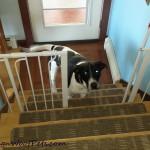 Monday Mischief – The Gate