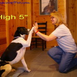 "Clicker Training – A Positive Experience  ""High 5"""