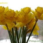 "#52Snapshots – ""Spring"""