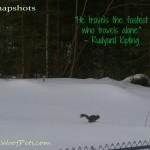 """#52Snapshots – """"Travel"""""""
