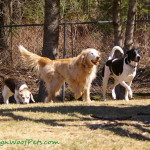 FitDog Friday – Pack Variety Award