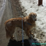FitDog Friday – First Spring Walks