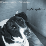"#52Snapshots of Life ""Quizzical"""