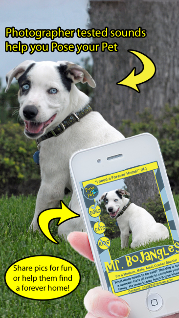 dogwithiphone