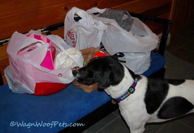 Monday Mischief - Someone Went Shopping