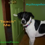 FitDog Friday & #52Snapshots of Life