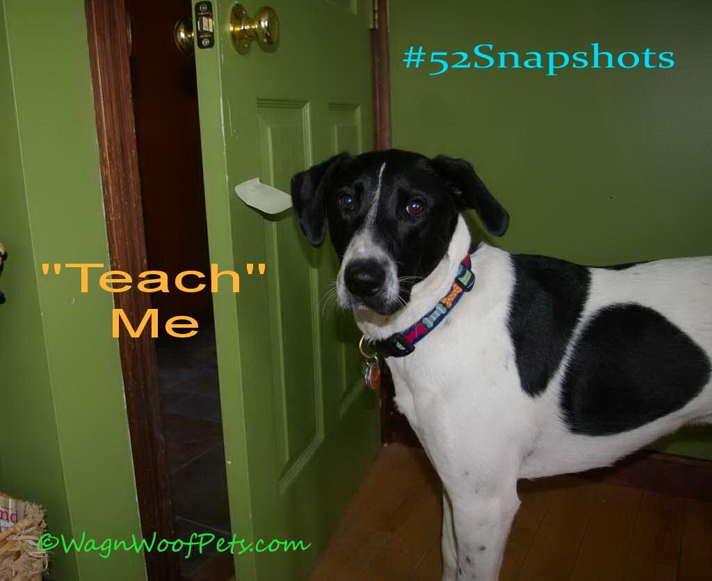 FitDog Friday & #52Snapshots