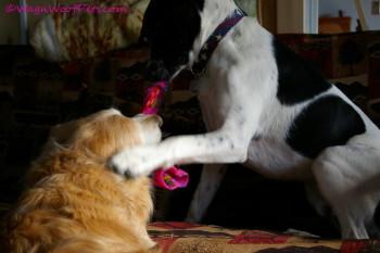 Toys Make Sheba a Puppy Again!