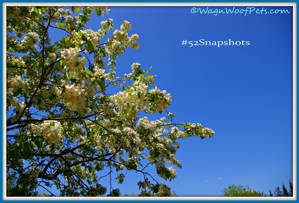 "#52Snapshots of Life ""Sky"""