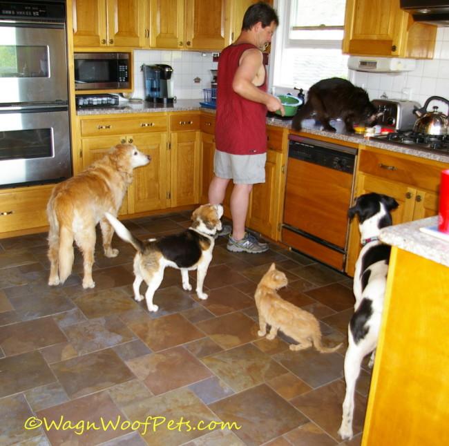 Multiple Pet Mania! Coming June 2015 #MultiPetMania
