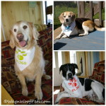 Getting Much Needed Help with House Cleaning & Grooming (& Giveaway!) #MultiPetMania