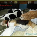 "#52Snapshots of Life ""Comfort"""