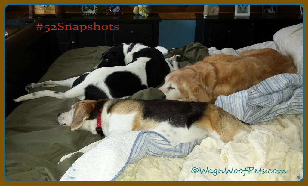 "#52Snapshots of Life ""Comfort"" #PBSG"
