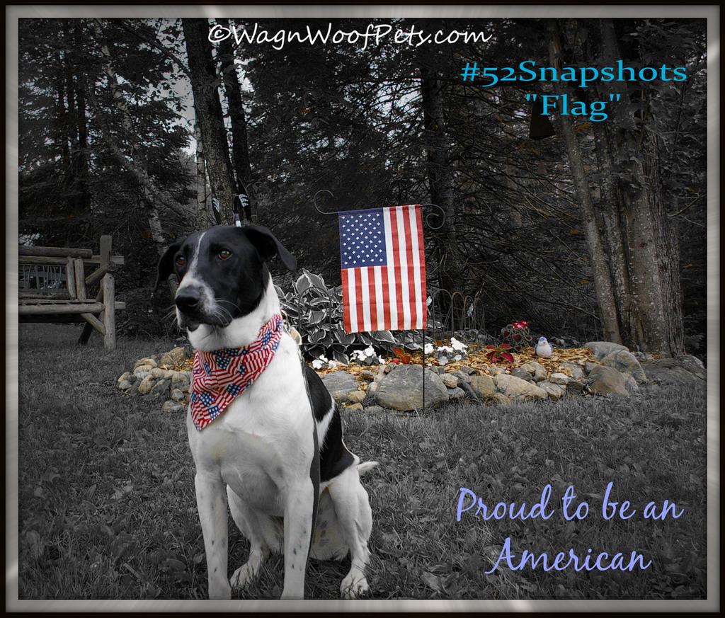 "#52Snapshots of Life ""Flag"""
