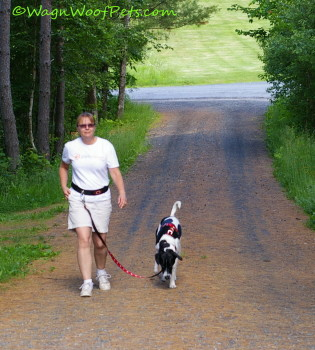 The Challenges of Exercising in a Multi Pet Household