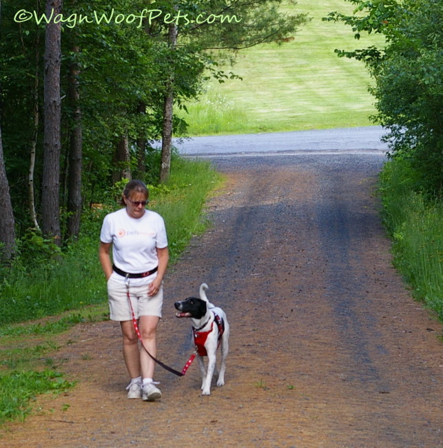 Challenges of Exercising with Multiple Dogs