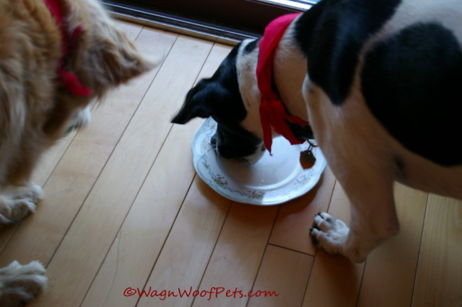 Dinner at Grammy's  - Wag 'n Woof Pets