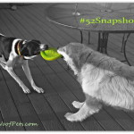 "#52Snapshots of Life ""Play"""