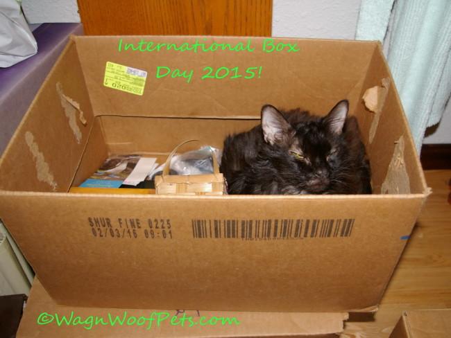 Sam Box  1