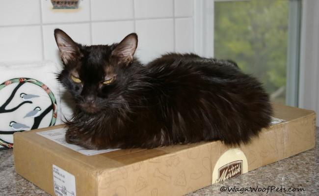 Sam on Merrick Box