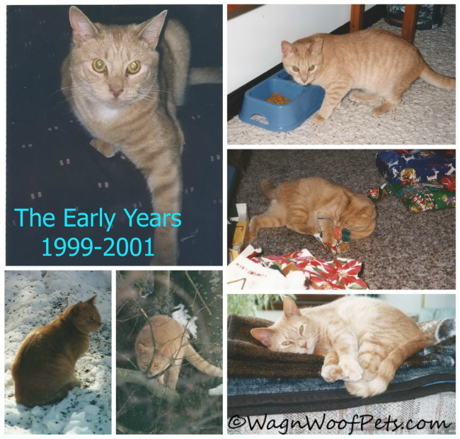For Love of a Golden Cat - Early Years