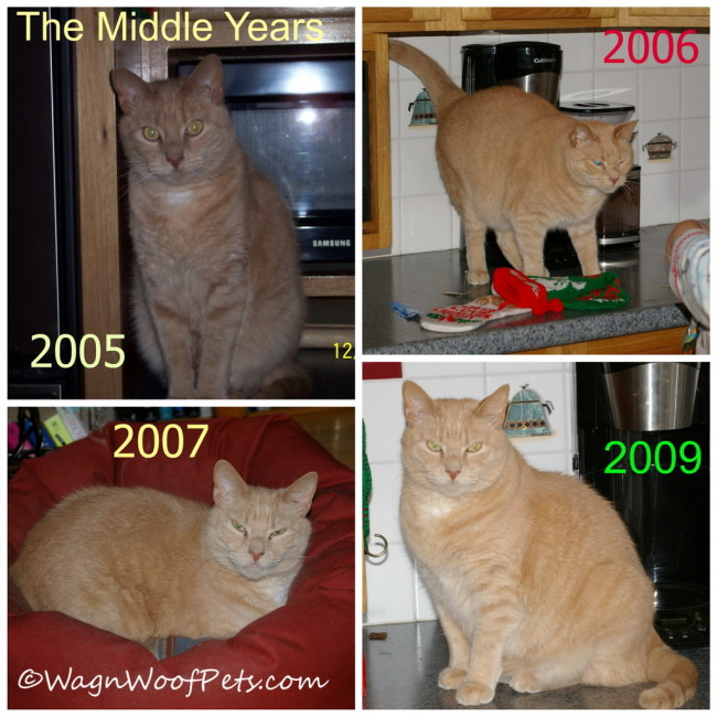 For Love of a Golden Cat - The Middle Years