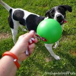 Fitness Fun with Tuggo Dog Toy (& Giveaway!)
