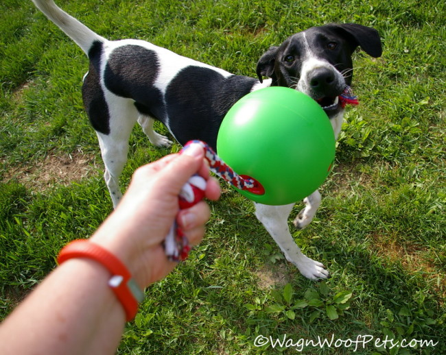 Tuggo Dog Toy for Fitness (& Giveaway)