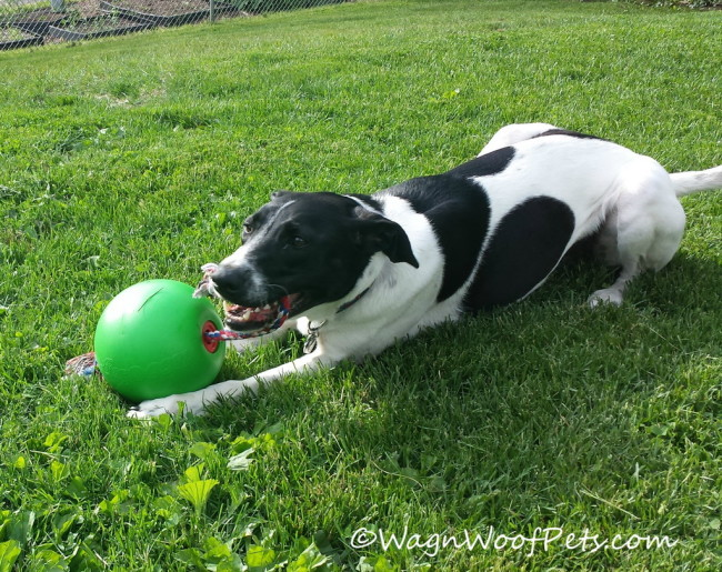 Tuggo Dog Toy Review & Giveaway